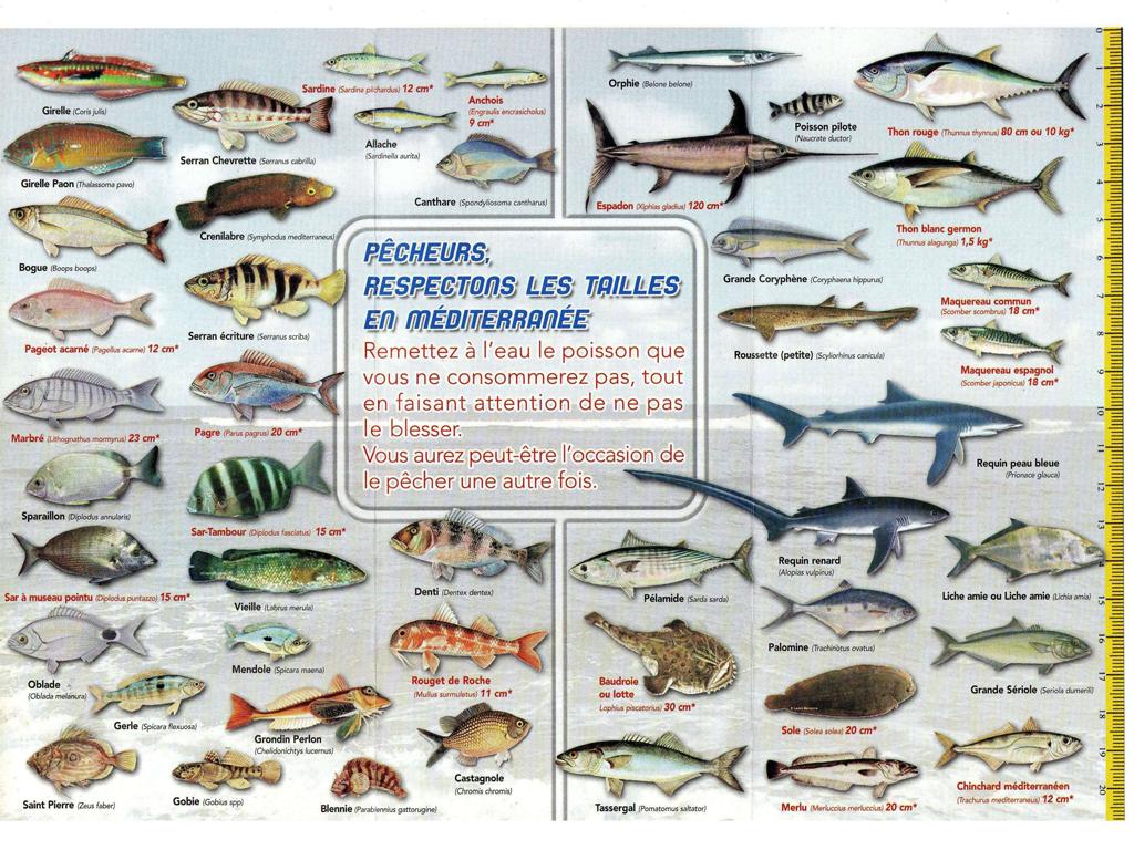 Pêcheurs, Respectons les tailles des poissons en mer Méditerranée